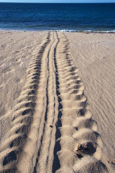 Giant Turtle Tracks in the Sand-Paul Souders-Photographic Print