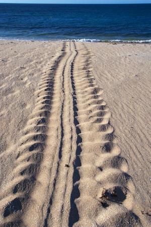 https://imgc.artprintimages.com/img/print/giant-turtle-tracks-in-the-sand_u-l-pzn9xg0.jpg?p=0