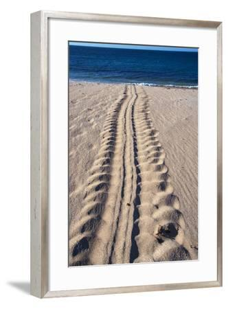 Giant Turtle Tracks in the Sand-Paul Souders-Framed Photographic Print
