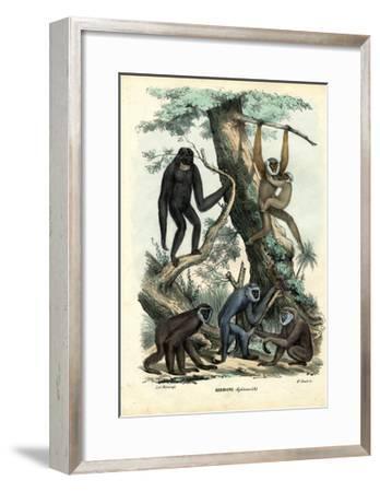 Gibbons, 1863-79-Raimundo Petraroja-Framed Giclee Print