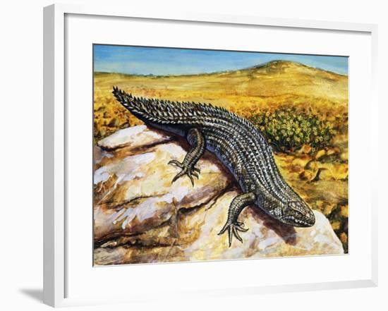 Gidgee Spiny-Tailed Skink or Stoke's Skink (Egernia Stokesii), Scincidae--Framed Giclee Print