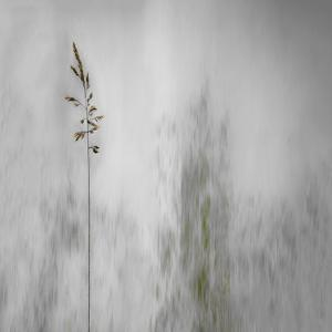 Blade of Grass by Gilbert Claes
