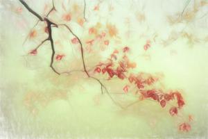 luce dorata by Gilbert Claes