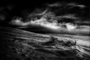 marram grass by Gilbert Claes