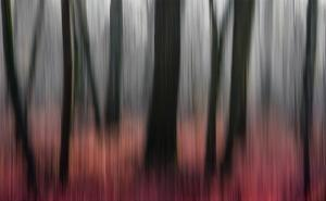 Red Wood by Gilbert Claes