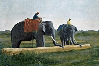 Elephants Moving a Log, Ceylon, C1890 by Gillot