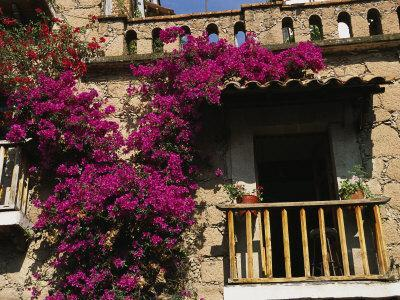 Bougainvillea Flowers on the Balcony of an Old Building in Taxco