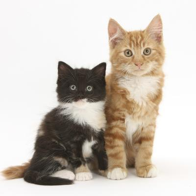Ginger and Black-And-White Kittens-Mark Taylor-Photographic Print
