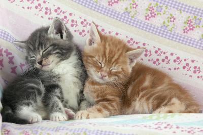 Ginger and Grey Tabby Kittens Sleeping--Photographic Print