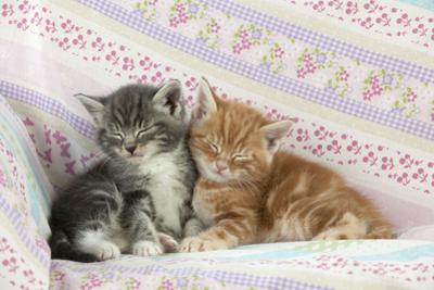 Ginger and Grey Tabby Kittens Sleeping