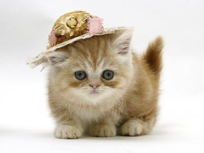 Ginger Kitten Wearing a Straw Hat-Mark Taylor-Photographic Print