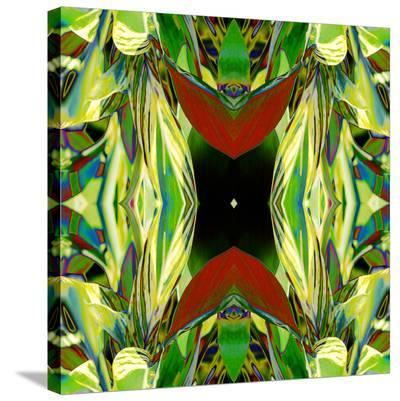 Ginger Shield2-Rose Anne Colavito-Stretched Canvas Print