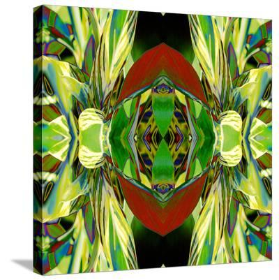 Ginger Shield-Rose Anne Colavito-Stretched Canvas Print