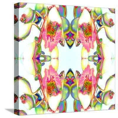 Ginger3-Rose Anne Colavito-Stretched Canvas Print