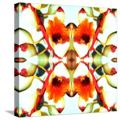 Ginger4-Rose Anne Colavito-Stretched Canvas Print