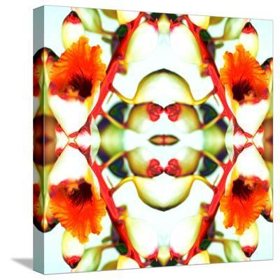 Ginger5-Rose Anne Colavito-Stretched Canvas Print