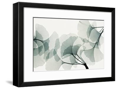 Gingko Dance-Steven N. Meyers-Framed Giclee Print