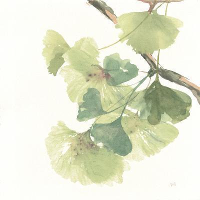 Gingko Leaves II on White-Chris Paschke-Premium Giclee Print