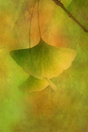 https://imgc.artprintimages.com/img/print/gingko-love_u-l-q1bkfvx0.jpg?p=0