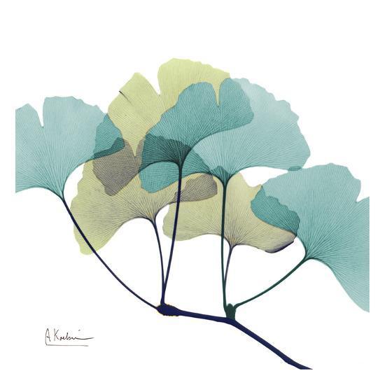 Gingko-Albert Koetsier-Art Print