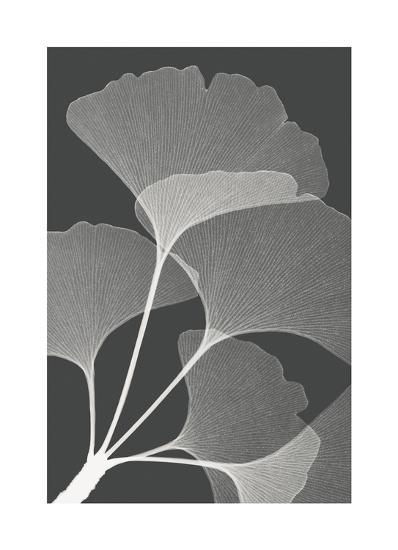 Gingkos II-Steven N^ Meyers-Giclee Print