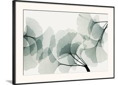 Ginkgo Dance-Steven N^ Meyers-Framed Art Print