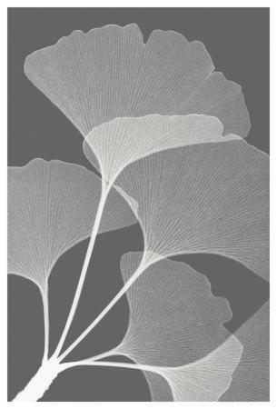 https://imgc.artprintimages.com/img/print/ginkgos-ii_u-l-f34azd0.jpg?p=0