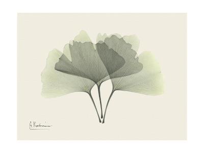 Ginko Moments-Albert Koetsier-Premium Giclee Print