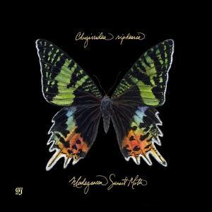 Striking Butterfly II by Ginny Joyner