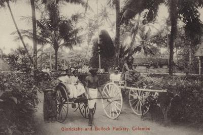 Ginricksha and Bullock Hackery in Colombo--Photographic Print