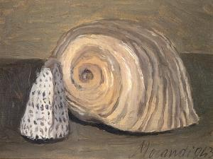 Shells by Giorgio Morandi