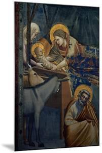 Life of Christ, the Nativity in the Stable by Giotto di Bondone