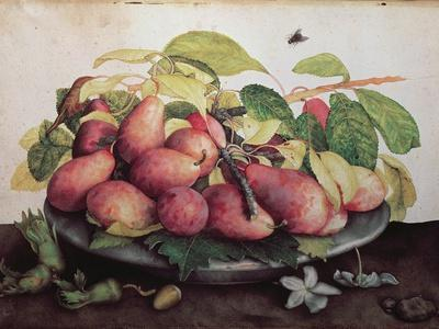 Pears with Hawthorns