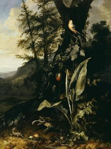 Forest Floor with a Toad and a Lizard, a Bullfinch on a Branch of Ivy Above and a Mountain Beyond by Giovanni Battista Salvi da Sassoferrato