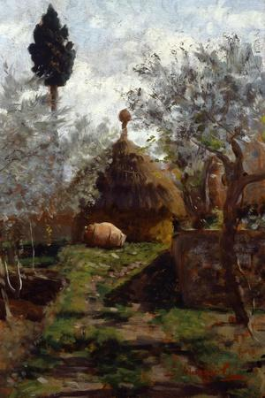 Haystacks Between Olive Trees