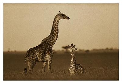 Giraffe adult and foal on savanna, Kenya - Sepia-Tim Fitzharris-Art Print