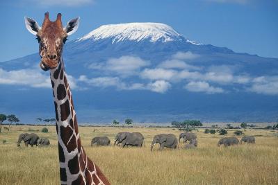 Giraffe and Elephants near Mount Kilimanjaro-DLILLC-Photographic Print