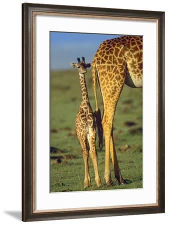 Giraffe Calf Standing Next to its Mother, Kenya, Africa-Tim Fitzharris-Framed Photographic Print