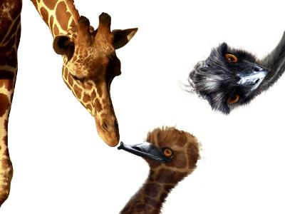 Giraffe, Emu and Offspring-Abdul Kadir Audah-Photographic Print