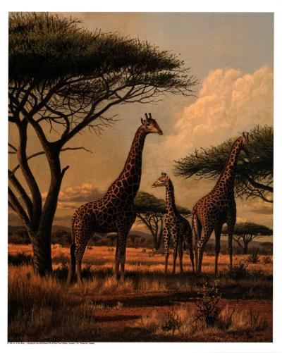 Giraffe Family-Clive Kay-Art Print