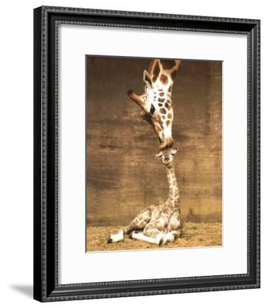 Giraffe, First Kiss-Ron D'Raine-Framed Art Print