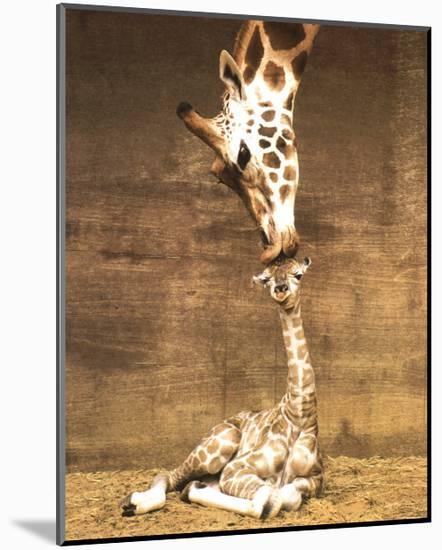 Giraffe, First Kiss-Ron D'Raine-Mounted Art Print