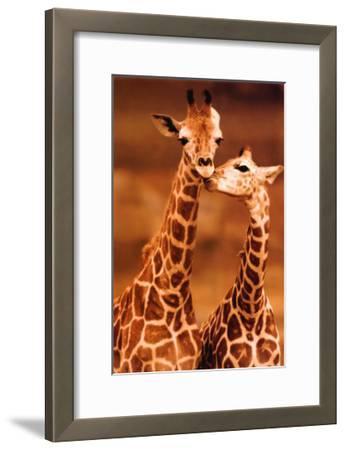 Giraffe, First Love