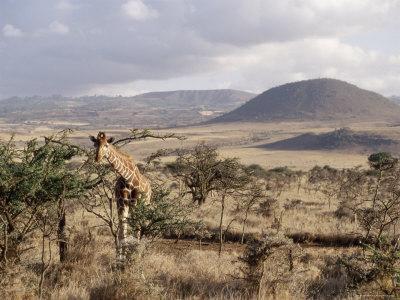 https://imgc.artprintimages.com/img/print/giraffe-kenya-east-africa-africa_u-l-p2qbww0.jpg?p=0