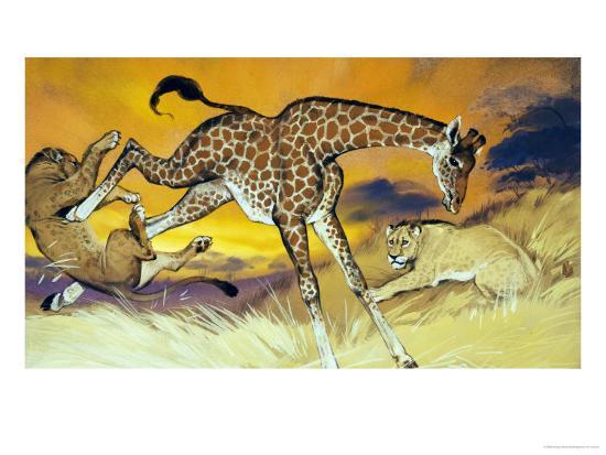 Giraffe Kicking Lion-Angus Mcbride-Giclee Print