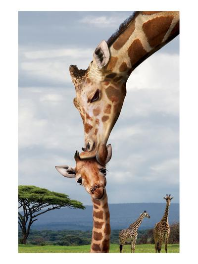 Giraffe Kissing Baby--Art Print