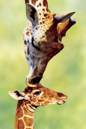 giraffe-mom