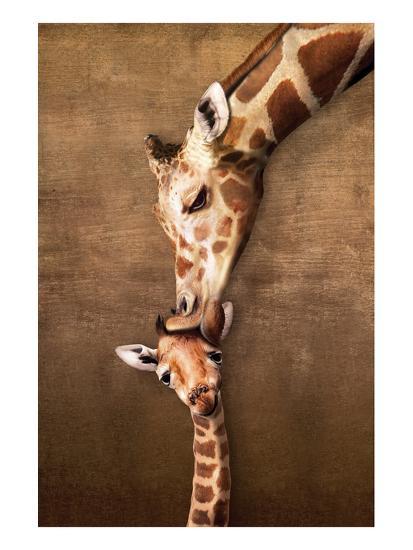 Giraffe Mother's Kiss--Art Print