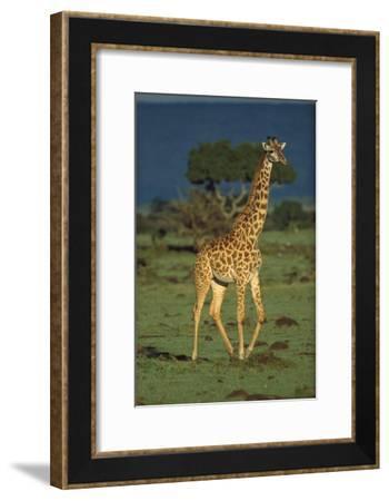 Giraffe portrait, Kenya-Tim Fitzharris-Framed Art Print
