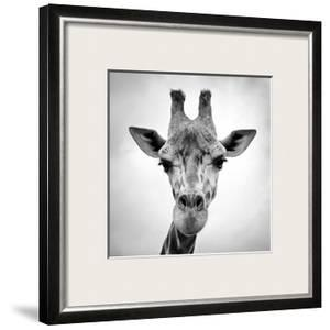 Beautiful Animals Black and White Photography artwork for